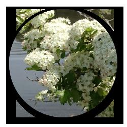 flores-orilla-rio-sierra-de-codex
