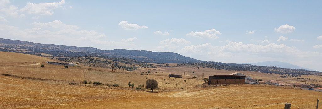 Pacas frente a La Tala
